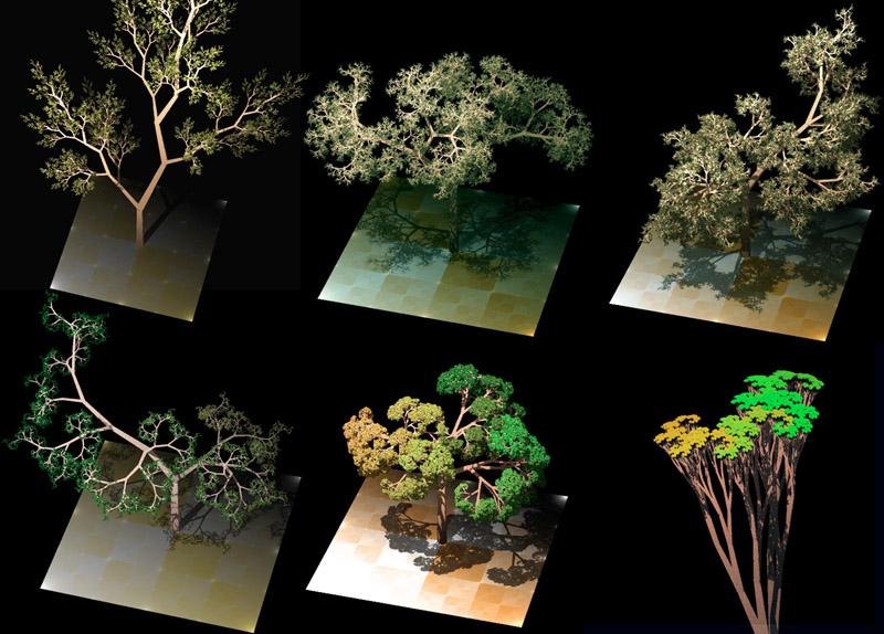 Dragon_trees